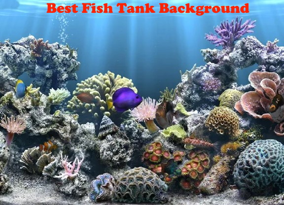 Best Fish Tank Background