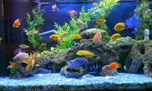 Fish Tank Pumps